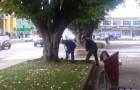 Hallan escasos restos arqueológicos en Plaza de Armas de Castro