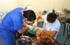 Finalizan operativos de esterilización en la capital provincial