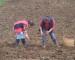 Próxima semana se inicia el pago del bono de emergencia a agricultores castreños
