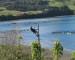 Isla de Quehui tendrá alumbrado público