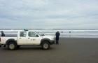 Descartan varazón de ballena en Cucao y confirman que machas regresaron al mar