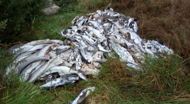 Denuncian vertimientos de peces muertos en camino vecinal de Yutuy