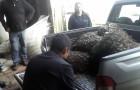 Incautan choro zapato en veda extraído de reserva marina en Putemún