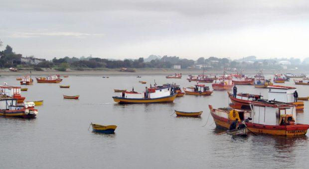 Sernapesca llama a comprar productos pesqueros, solo en comercio establecido.