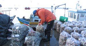 Se levanta prohibición de extracción de mariscos en localidades de la comuna de Quemchi.