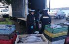 Quemchi: Capitanía de Puerto incauta cargamento de merluza austral.